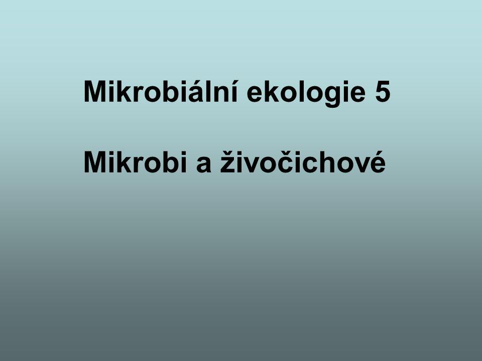 Mikrobiální ekologie 5 Mikrobi a živočichové
