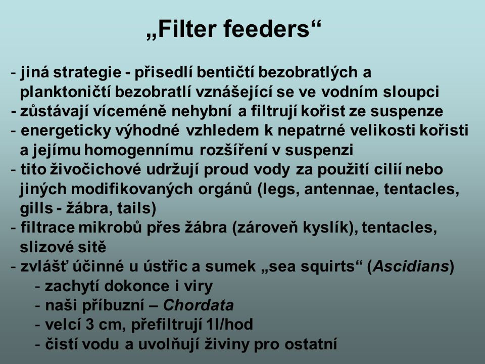"""""""Filter feeders jiná strategie - přisedlí bentičtí bezobratlých a"""