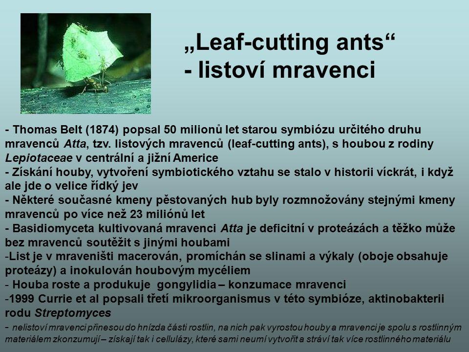 """Leaf-cutting ants - listoví mravenci"