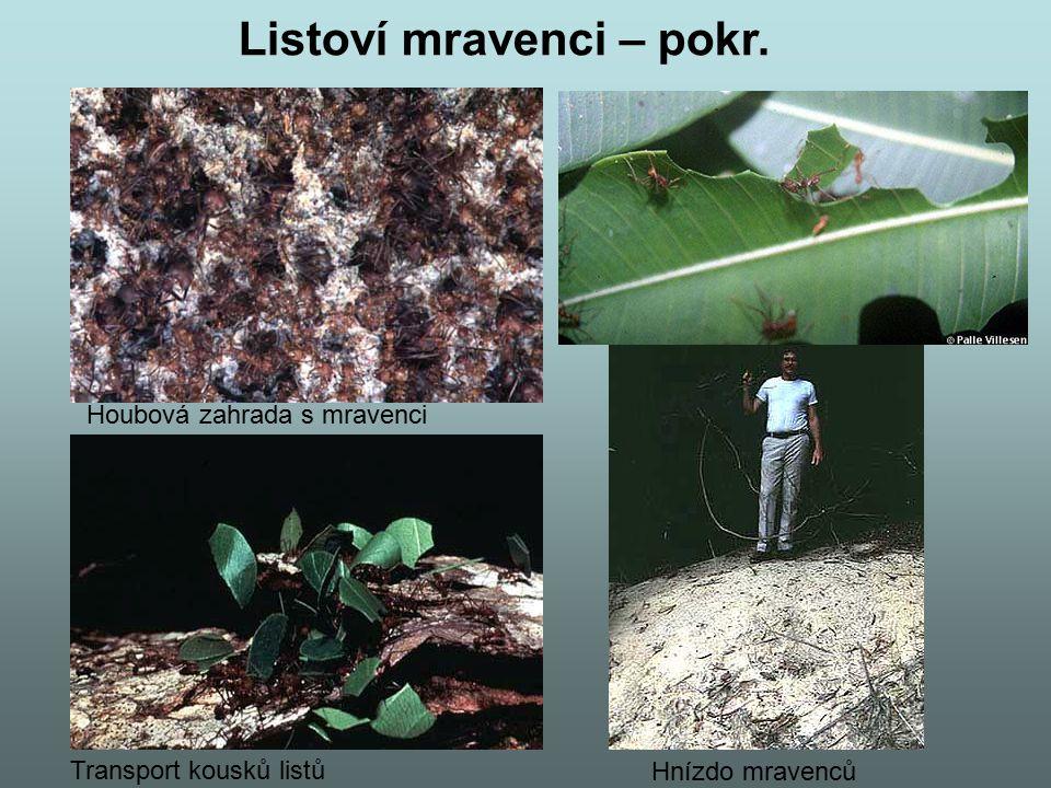 Listoví mravenci – pokr.