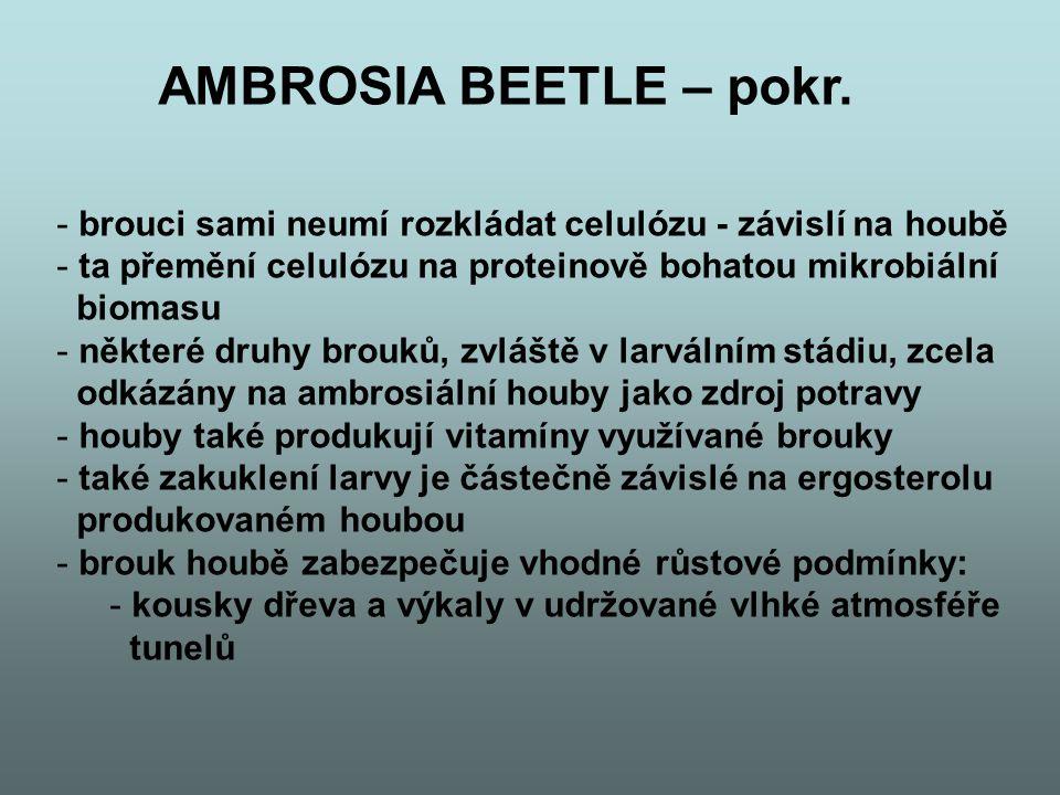 AMBROSIA BEETLE – pokr. brouci sami neumí rozkládat celulózu - závislí na houbě. ta přemění celulózu na proteinově bohatou mikrobiální.