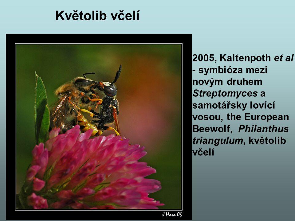 Květolib včelí 2005, Kaltenpoth et al symbióza mezi novým druhem