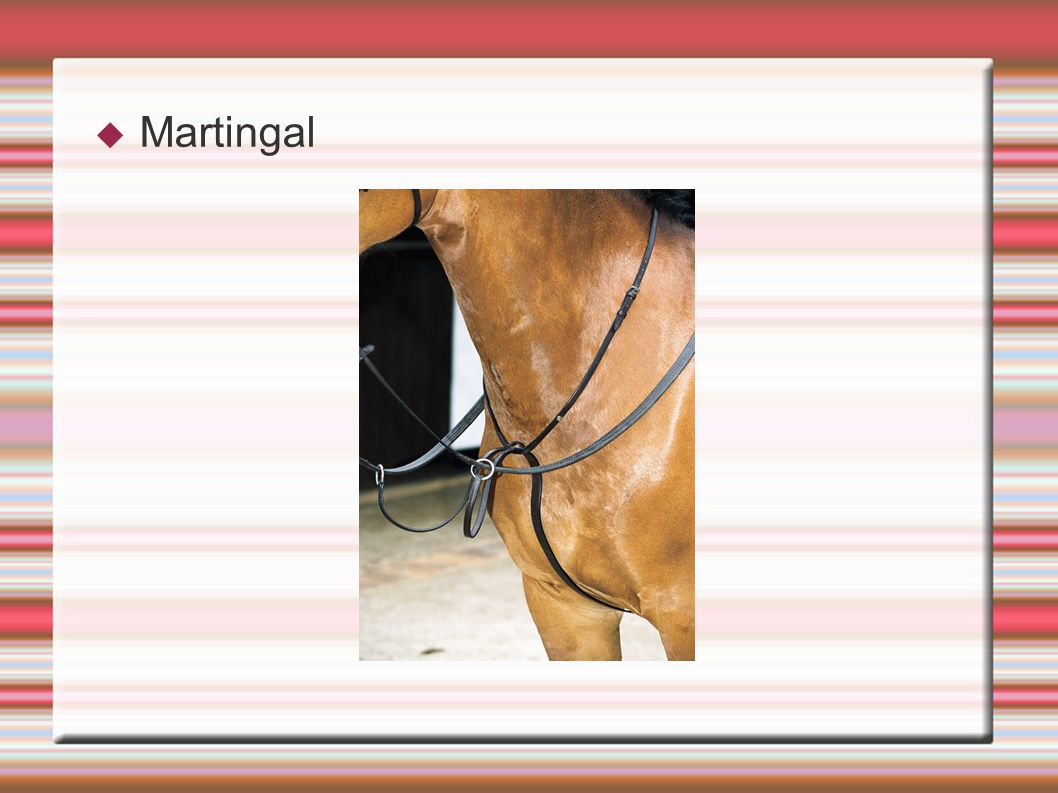 Martingal