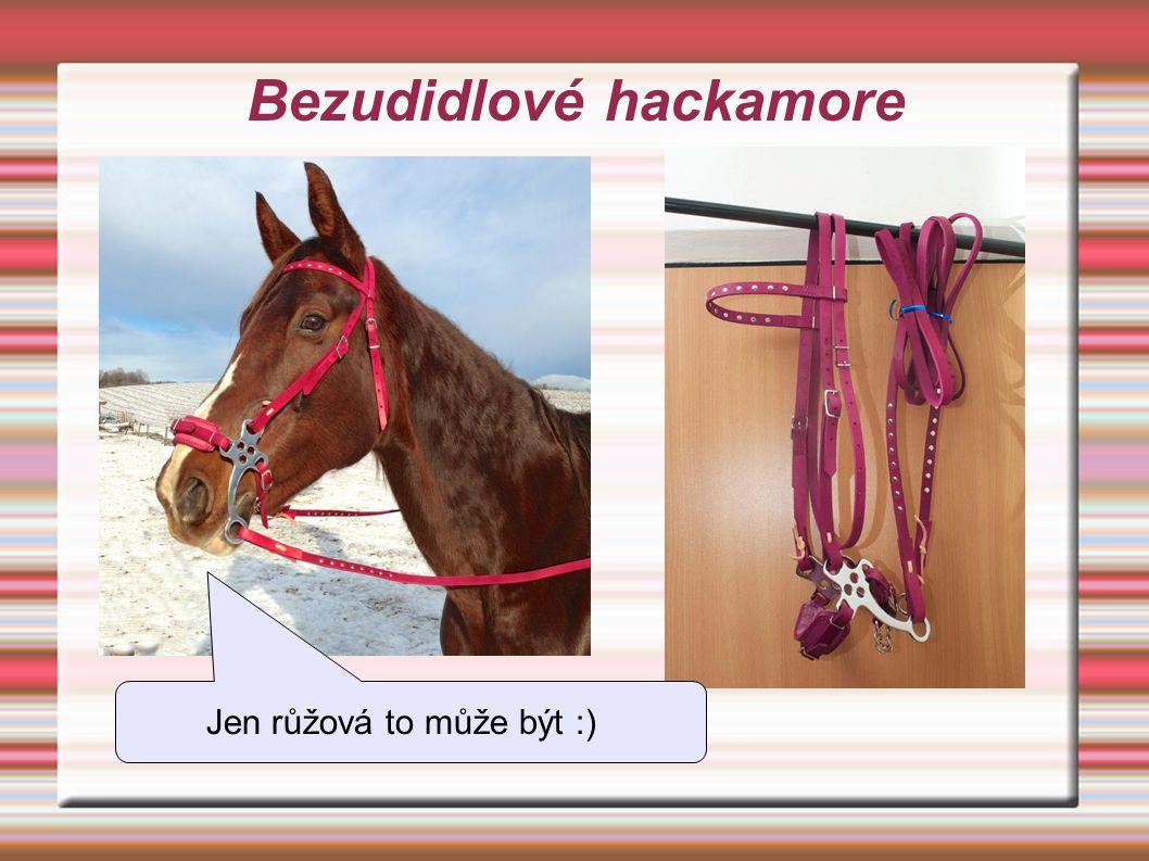 Bezudidlové hackamore