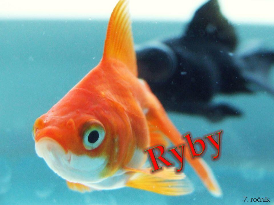 Ryby 7. ročník