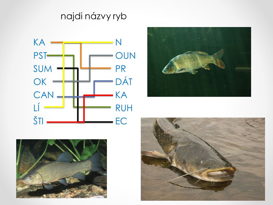 najdi názvy ryb KA N PST OUN SUM PR OK DÁT CAN KA LÍ RUH ŠTI EC