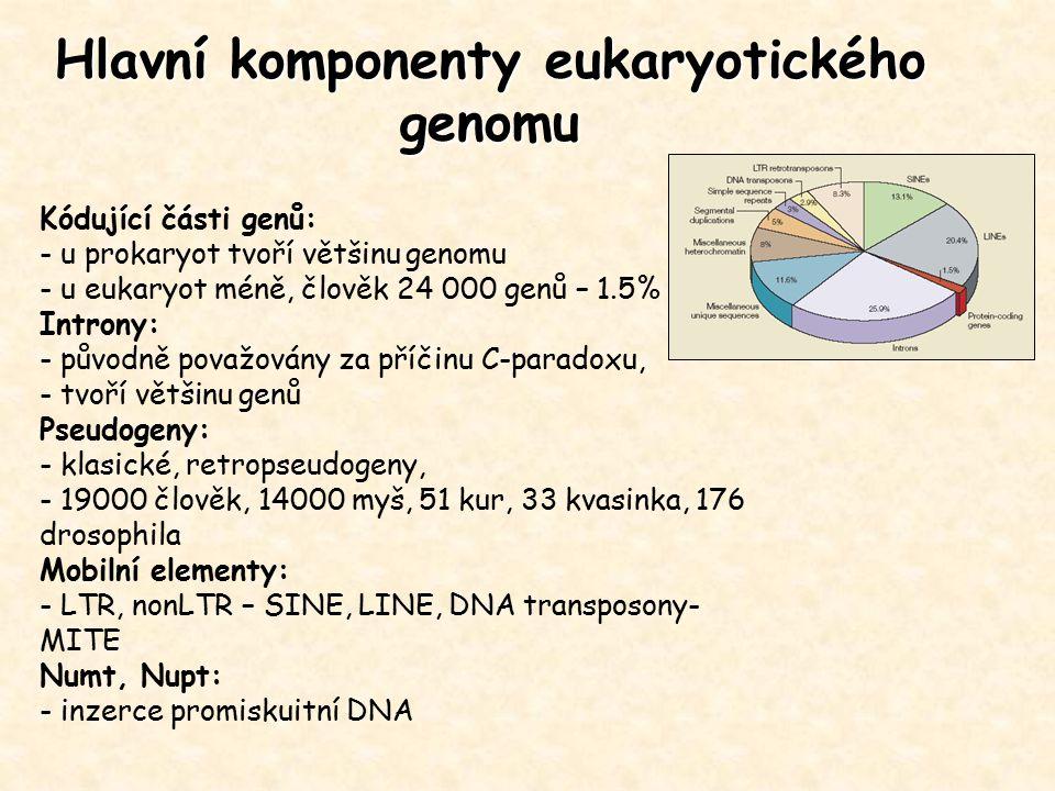 Hlavní komponenty eukaryotického genomu