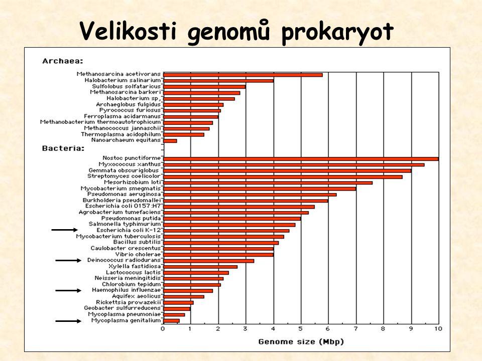 Velikosti genomů prokaryot