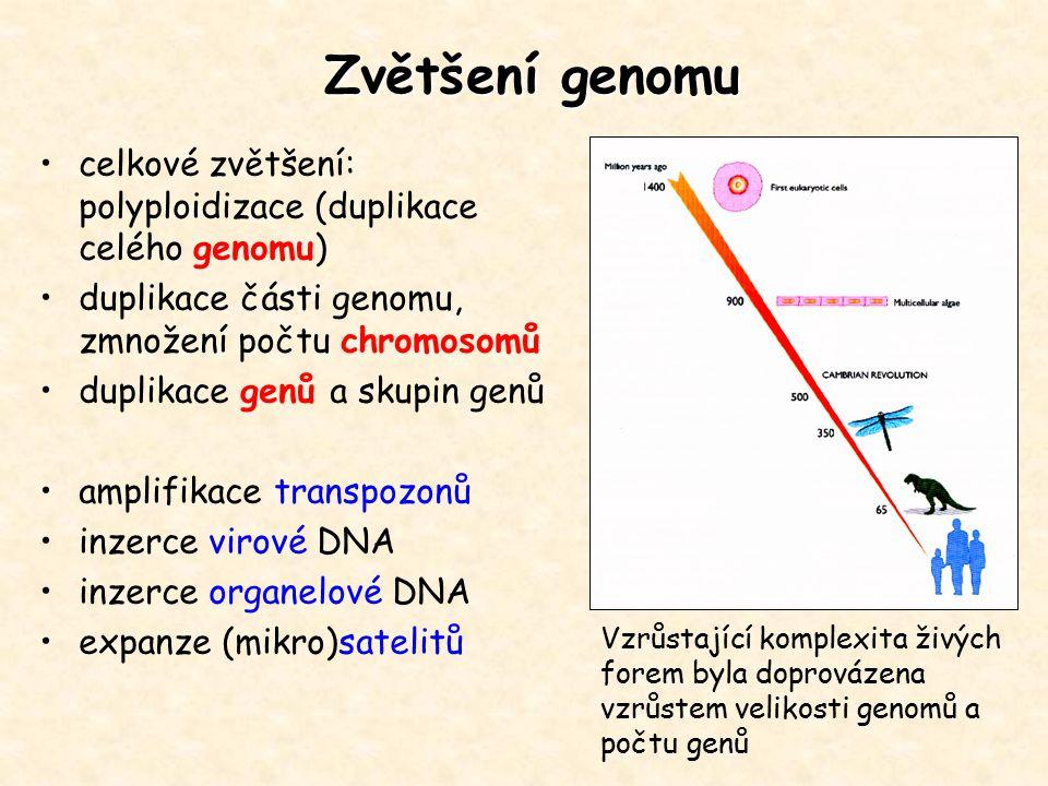 Zvětšení genomu celkové zvětšení: polyploidizace (duplikace celého genomu) duplikace části genomu, zmnožení počtu chromosomů.