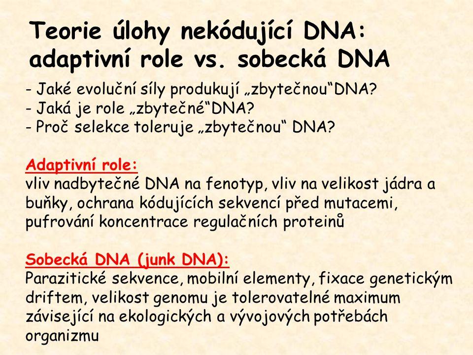 Teorie úlohy nekódující DNA: adaptivní role vs. sobecká DNA