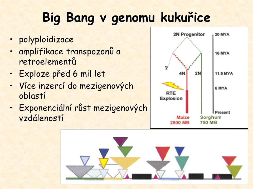 Big Bang v genomu kukuřice