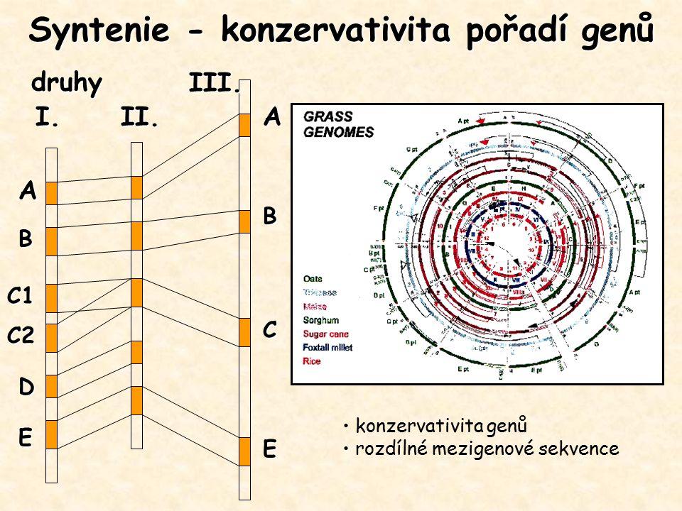 Syntenie - konzervativita pořadí genů