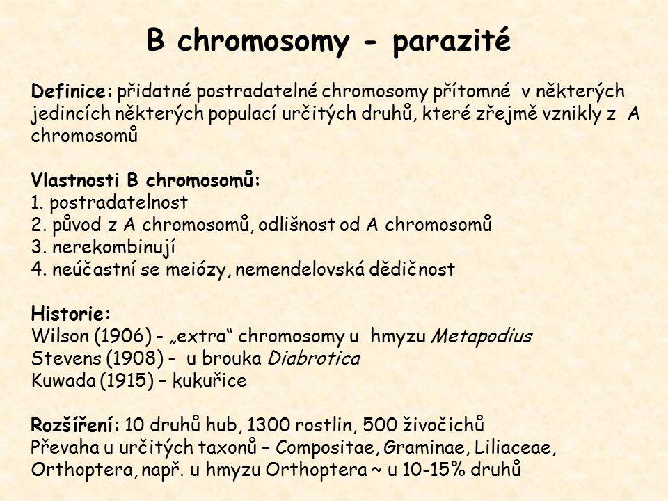 B chromosomy - parazité