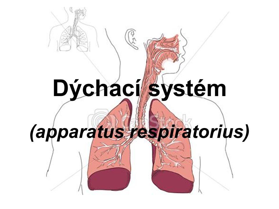 (apparatus respiratorius)
