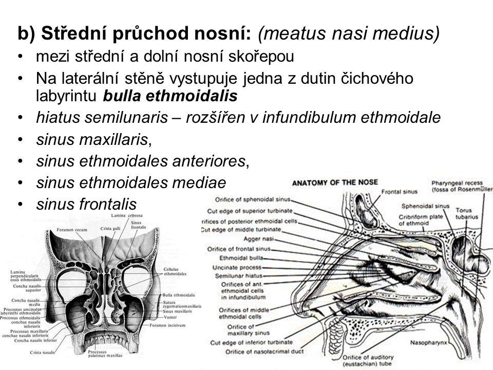 b) Střední průchod nosní: (meatus nasi medius)
