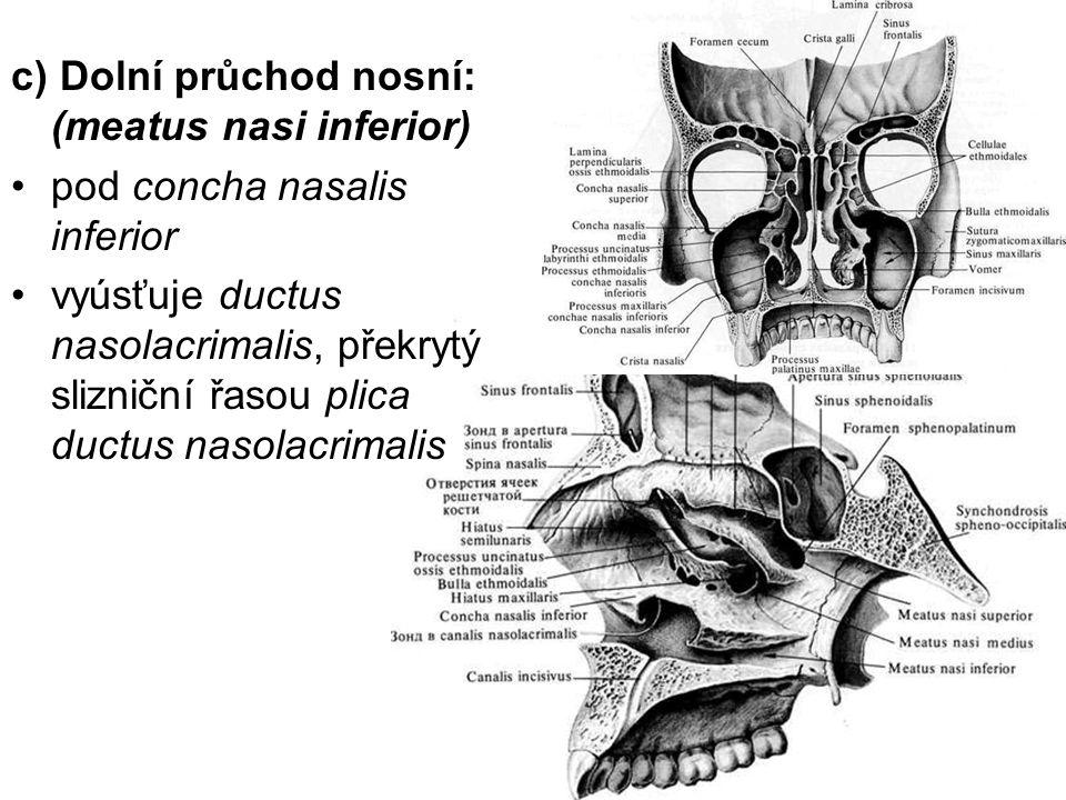 c) Dolní průchod nosní: (meatus nasi inferior)