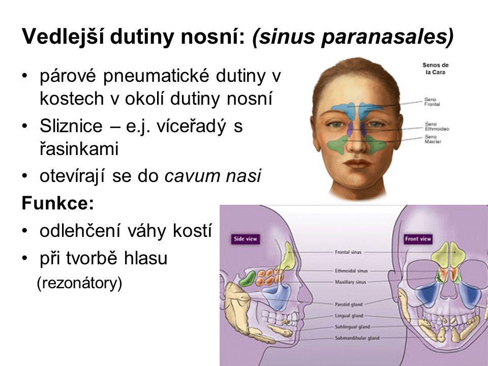 Vedlejší dutiny nosní: (sinus paranasales)