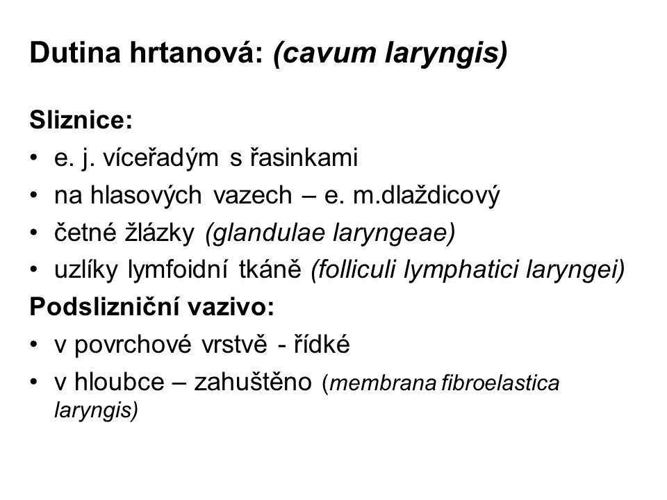 Dutina hrtanová: (cavum laryngis)