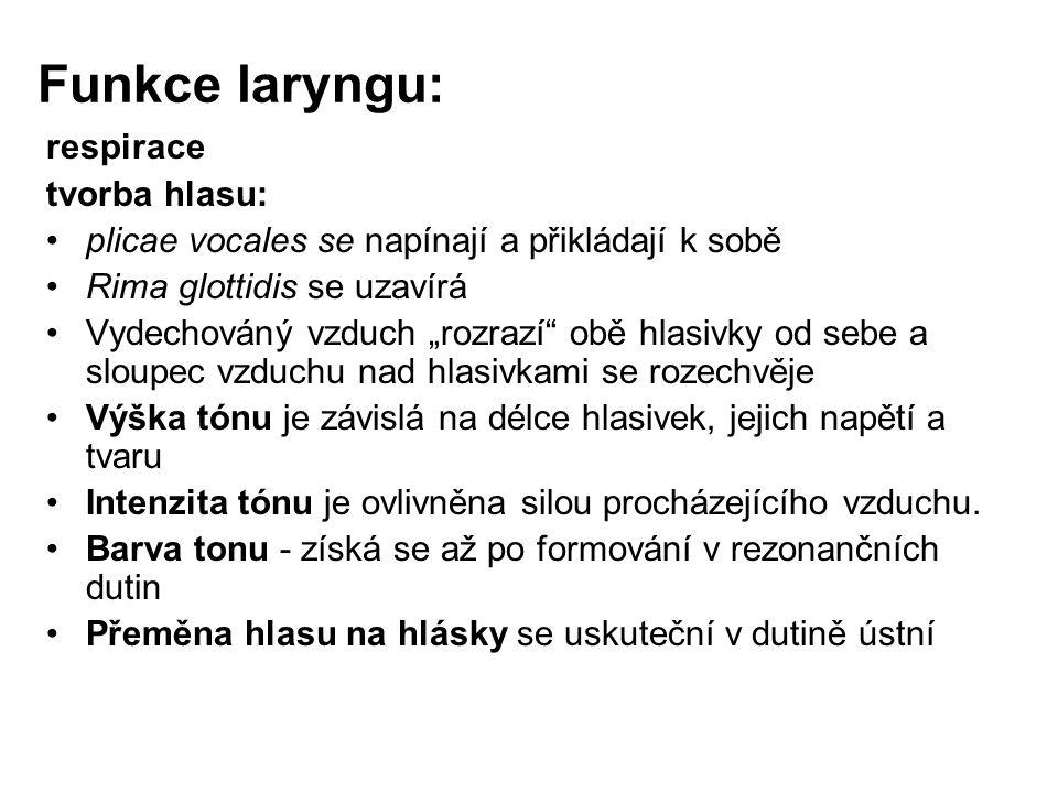 Funkce laryngu: respirace tvorba hlasu: