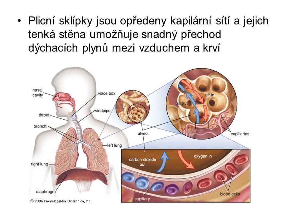 Plicní sklípky jsou opředeny kapilární sítí a jejich tenká stěna umožňuje snadný přechod dýchacích plynů mezi vzduchem a krví