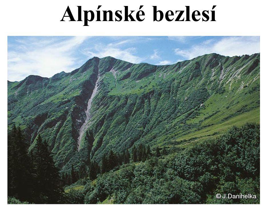 Alpínské bezlesí