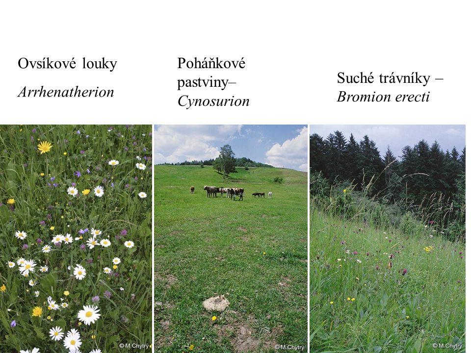 Ovsíkové louky Arrhenatherion Poháňkové pastviny– Cynosurion Suché trávníky – Bromion erecti