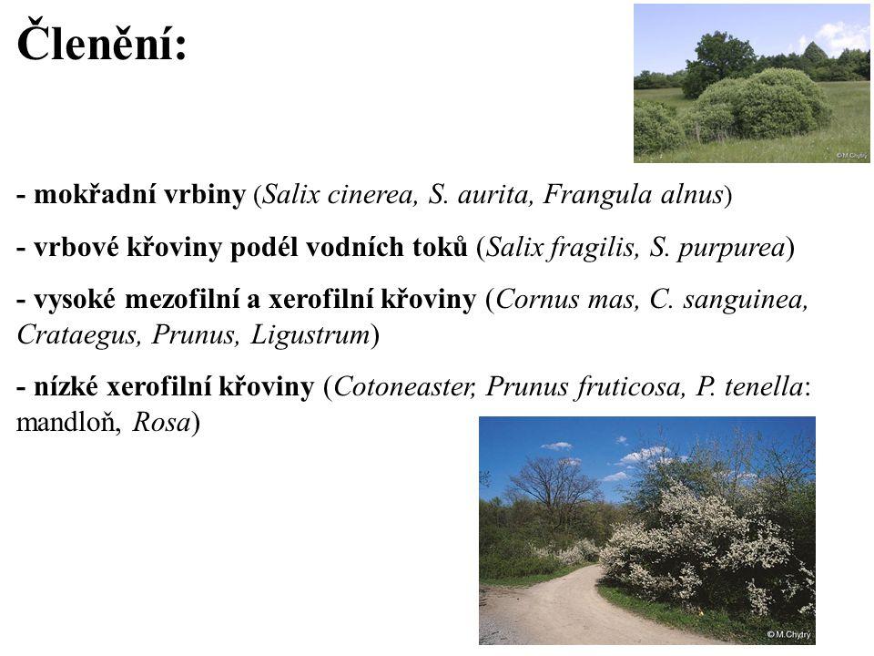 Členění: - mokřadní vrbiny (Salix cinerea, S. aurita, Frangula alnus)