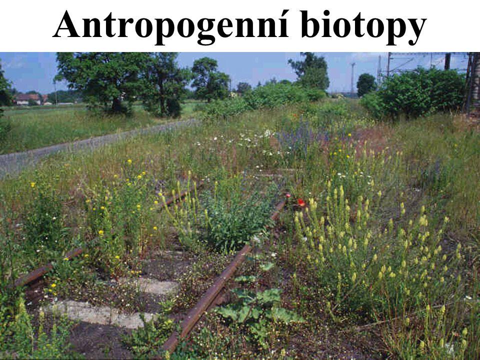 Antropogenní biotopy