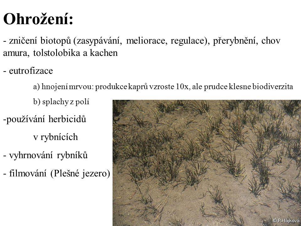 Ohrožení: - zničení biotopů (zasypávání, meliorace, regulace), přerybnění, chov amura, tolstolobika a kachen.