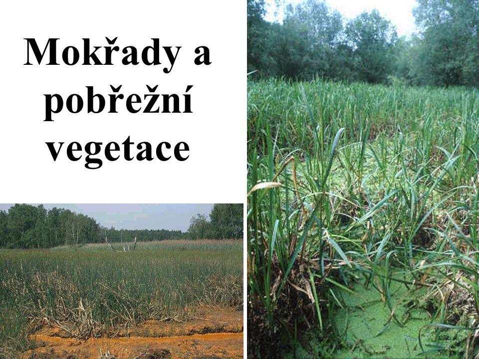 Mokřady a pobřežní vegetace