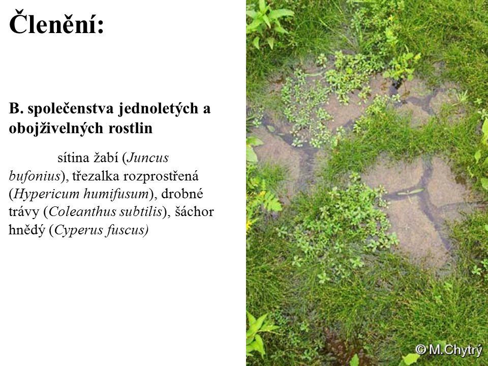 Členění: B. společenstva jednoletých a obojživelných rostlin