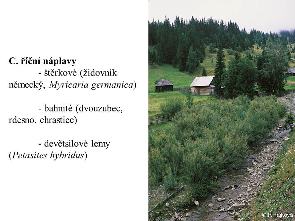 C. říční náplavy - štěrkové (židovník německý, Myricaria germanica) - bahnité (dvouzubec, rdesno, chrastice)