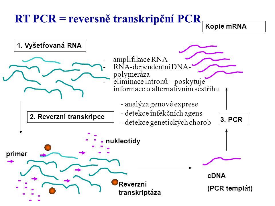 RT PCR = reversně transkripční PCR