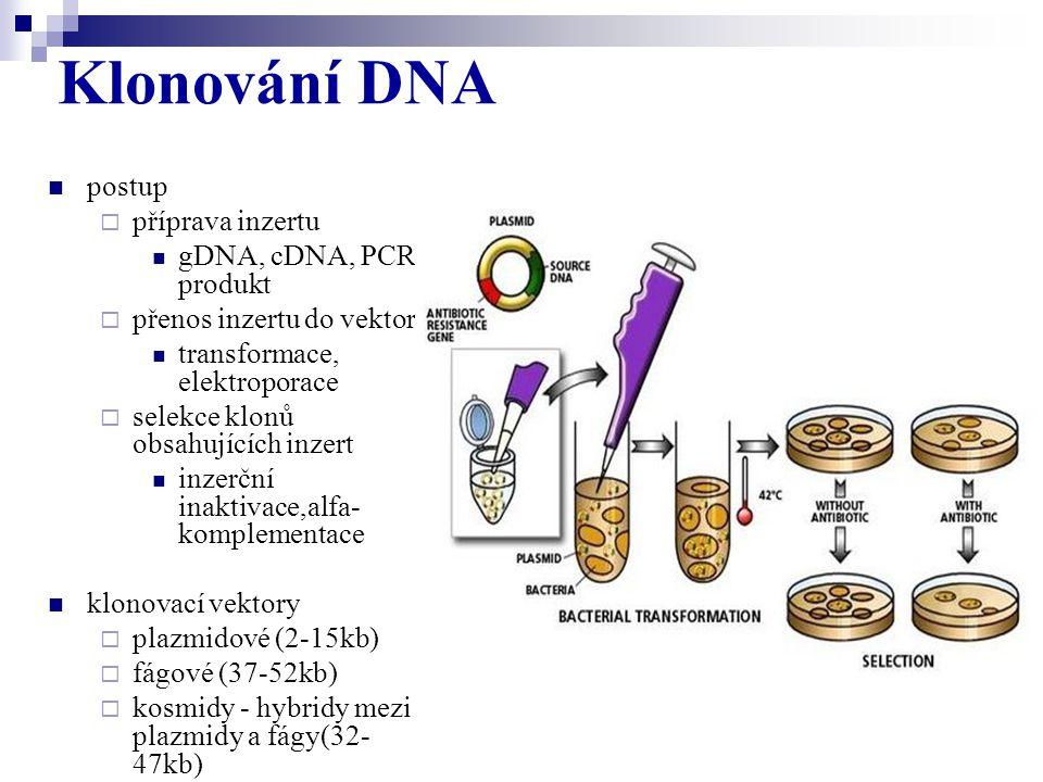 Klonování DNA postup příprava inzertu gDNA, cDNA, PCR produkt