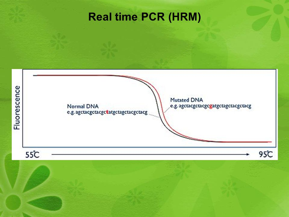 Real time PCR (HRM)