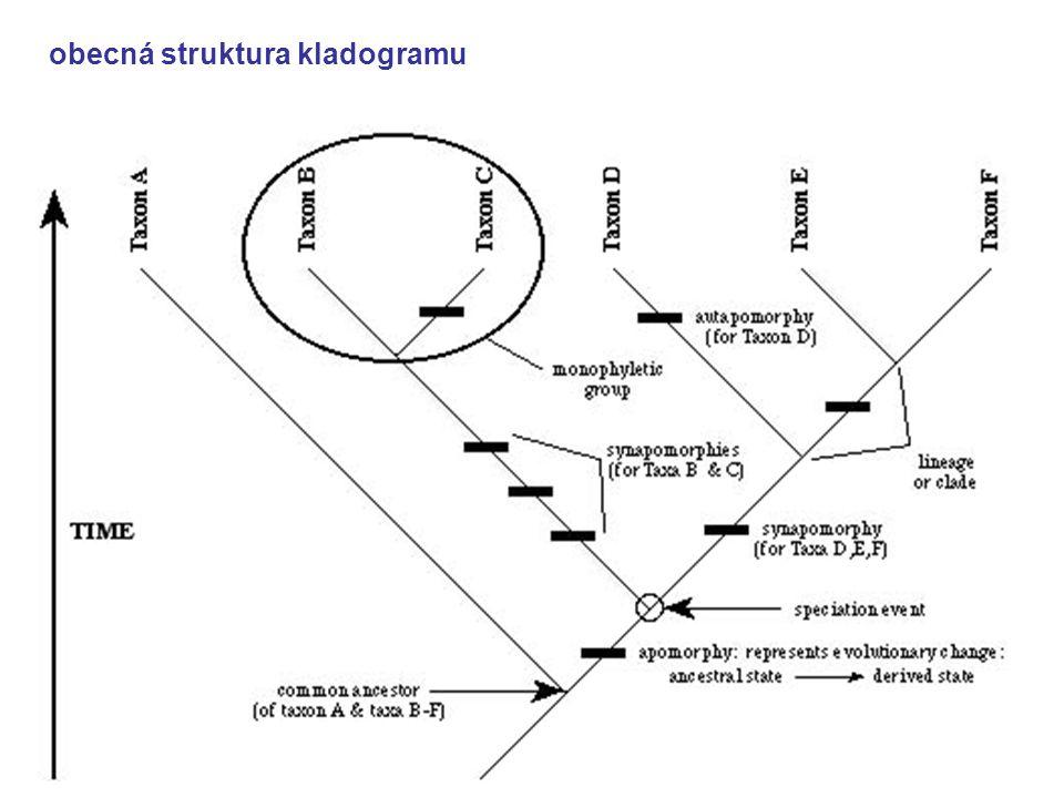 obecná struktura kladogramu