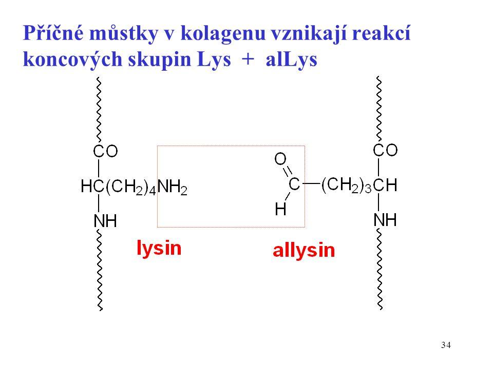 Příčné můstky v kolagenu vznikají reakcí koncových skupin Lys + alLys