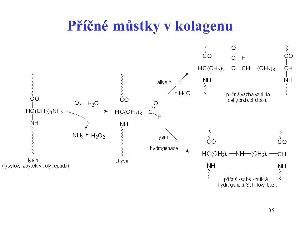 Příčné můstky v kolagenu