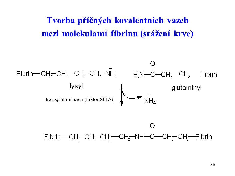 Tvorba příčných kovalentních vazeb mezi molekulami fibrinu (srážení krve)