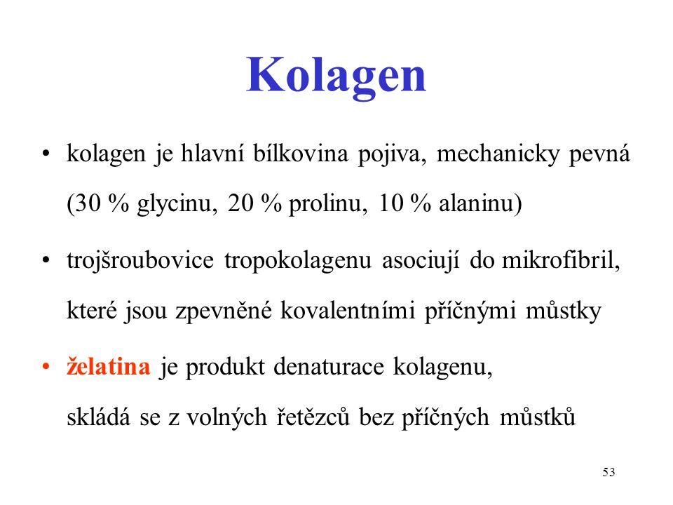 Kolagen kolagen je hlavní bílkovina pojiva, mechanicky pevná (30 % glycinu, 20 % prolinu, 10 % alaninu)