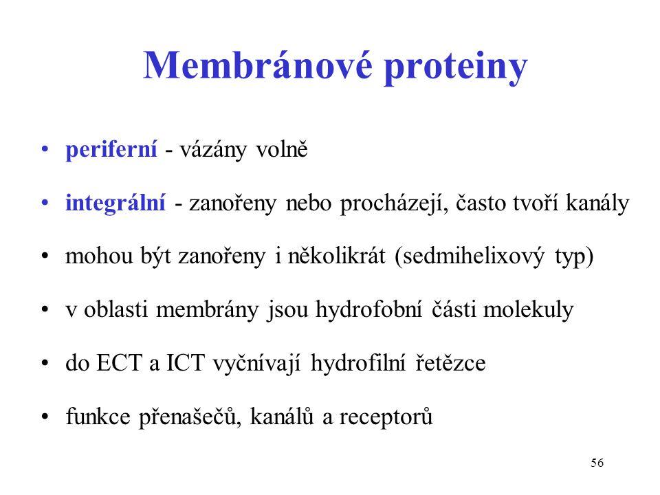 Membránové proteiny periferní - vázány volně