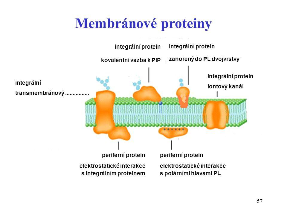 Membránové proteiny integrální protein kovalentní vazba k PIP