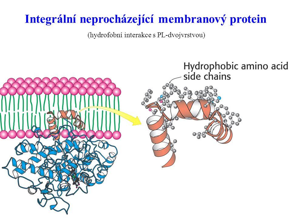 Integrální neprocházející membranový protein