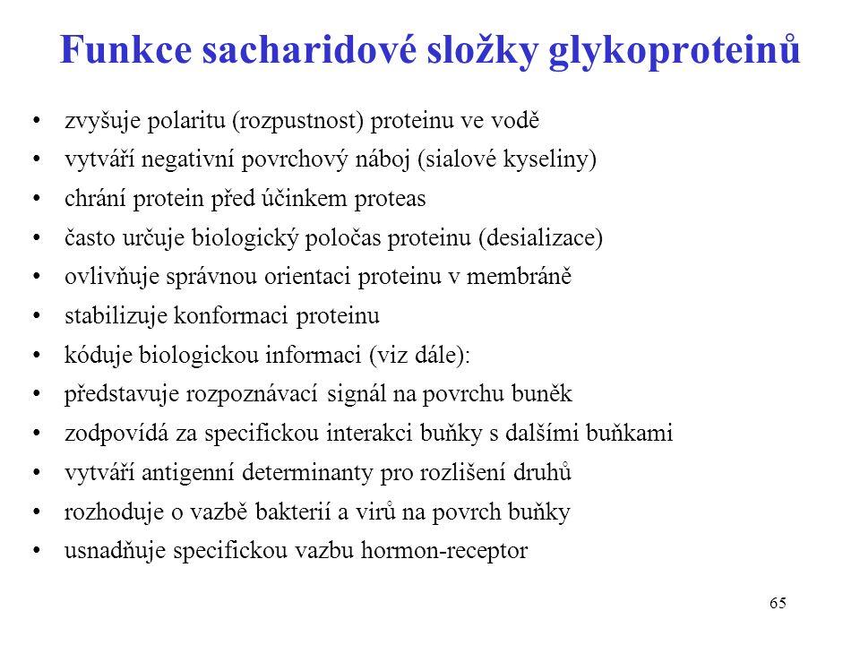 Funkce sacharidové složky glykoproteinů