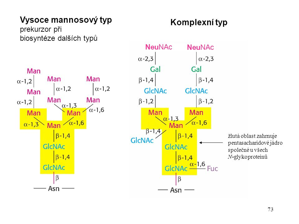 Vysoce mannosový typ Komplexní typ prekurzor při