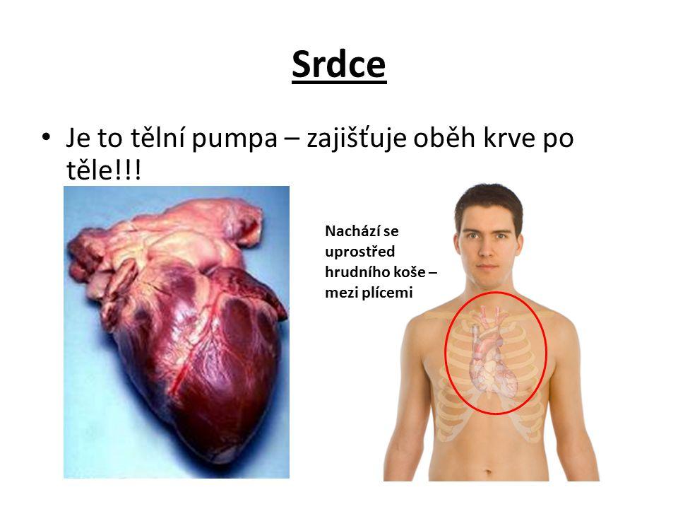 Srdce Je to tělní pumpa – zajišťuje oběh krve po těle!!!