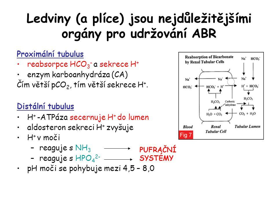 Ledviny (a plíce) jsou nejdůležitějšími orgány pro udržování ABR