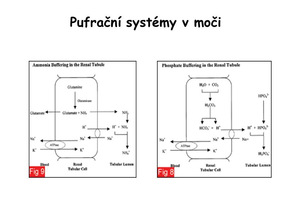 Pufrační systémy v moči