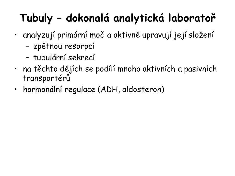 Tubuly – dokonalá analytická laboratoř