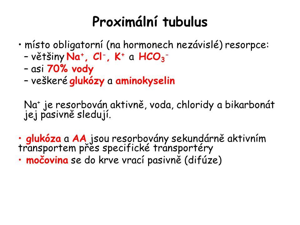 Proximální tubulus místo obligatorní (na hormonech nezávislé) resorpce: většiny Na+, Cl-, K+ a HCO3-